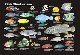 fish identification chart