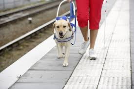 dogs for blind