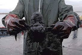 oil spill pictures