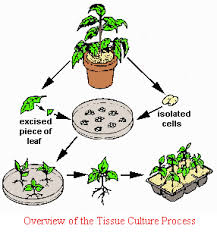 biotechnology plant