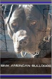 black american bulldogs