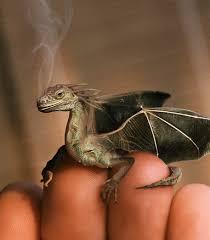 animals dragon