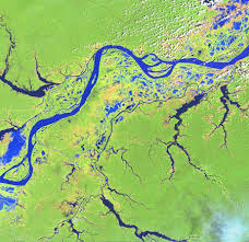 amazon river tributaries
