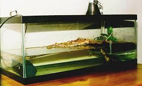 aquatic turtle setup