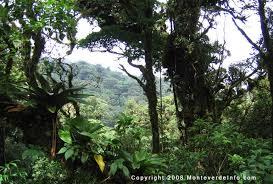 monte verde cloud forest