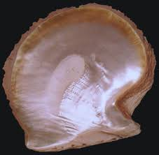 mother of pearl shell