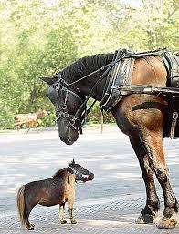 horses childrens