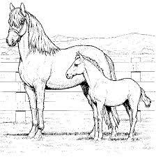 horses coloring