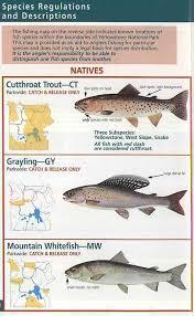 fish species chart