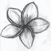 how to draw a frangipani