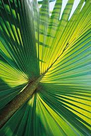 daintree rainforest vegetation