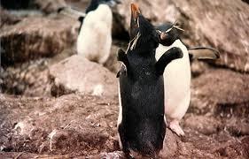 penguin displays