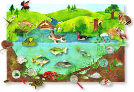 pond animals