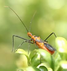 bug encyclopedia