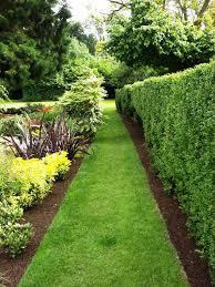 landscape hedges