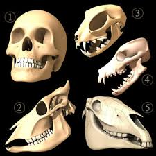 herbivores and carnivores