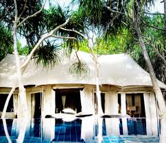 maldives banyan tree