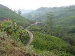 india tea plantations