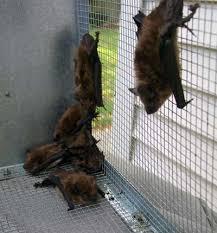 bats homes