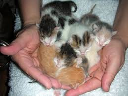 pictures of kittens for