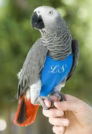bird clothes