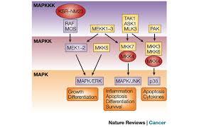 mapk signalling