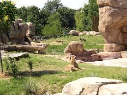 african wild dogs habitat