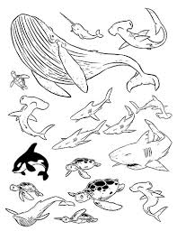 sea creature drawings
