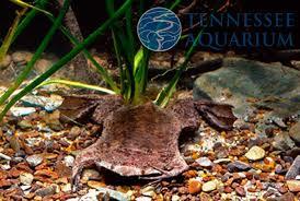 toad aquarium