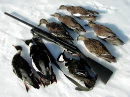 benelli super black eagle
