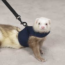 ferret harnesses