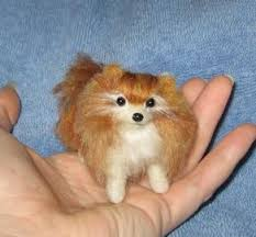 pomeranian dogs pictures