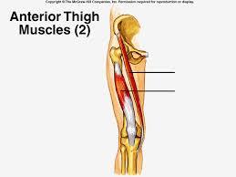 knee flexor