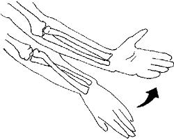arm supination