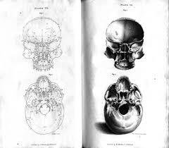 drawing of human skull