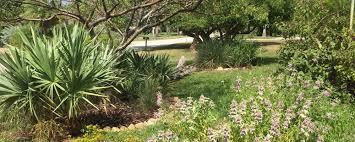 native florida plants low maintenance native plants u2013 go native landscaping