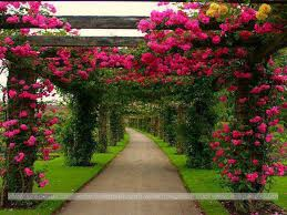 flower garden wallpaper wallpapers browse