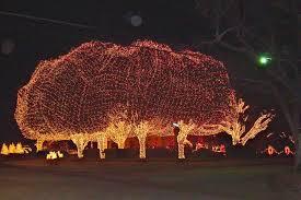 how to wrap christmas lights around a tree wrap lights around outdoor tree round designs