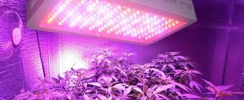 led marijuana grow lights led lights for growing indoor marijuana