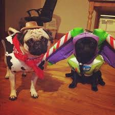 Pug Halloween Costume 145 Doggy Halloween Costumes Images Pet