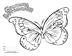 butterfly colouring