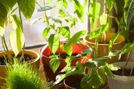 plante de chambre 6 plantes à mettre dans votre chambre pour combattre l insomnie