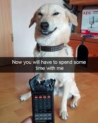 Bad Dog Meme - baddog gooddog dog dogs pinterest dog funny animal and humour