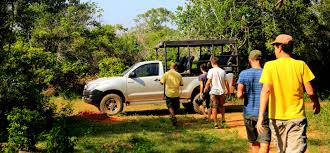 safari jeep yala safari jeep tours jeep safari tours in yala yala safari
