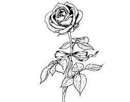 imagenes para colorear rosas colorear rosas para rosas para colorear en linea machico me