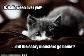 Halloween Cat Meme - is halloween over yet i can has cheezburger