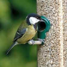 premium sunflower hearts bird seed rspb wild bird food rspb shop