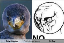 No Guy Meme - baby cormoran totally looks like no guy randomoverload