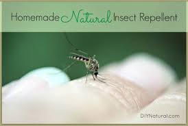 natural mosquito repellents homemade mosquito repellent keep mosquitos bugs away naturally