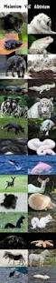 best 25 dolphins animal ideas on pinterest dolphins water